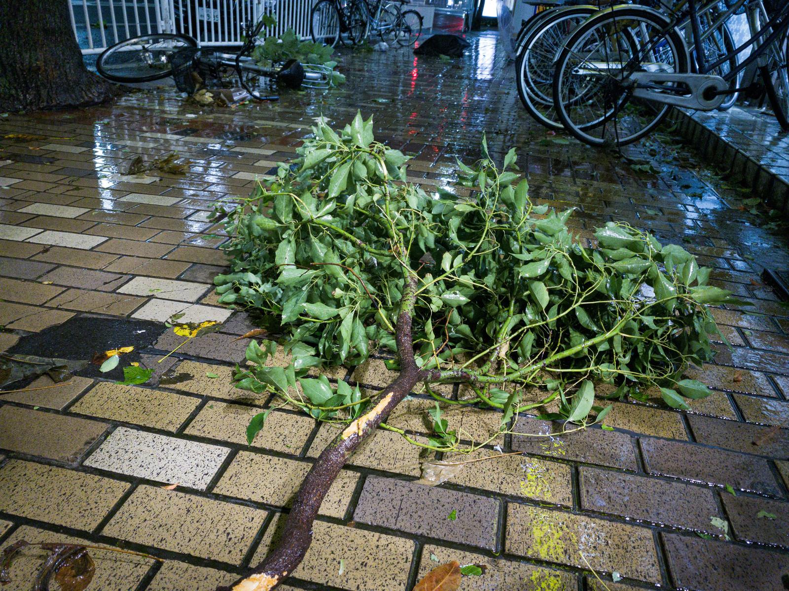 【日本は災害大国】毎年やってくる台風に備える対策方法と損害保険について